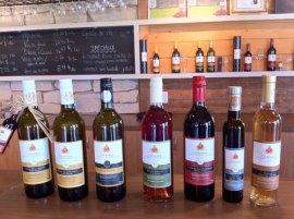 Dégustation des vins du Vignoble Ste Pétronille, île d'Orléans, vignobles, dégustations de vins